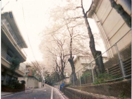demekin:桜