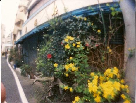 demekin:魚屋の花